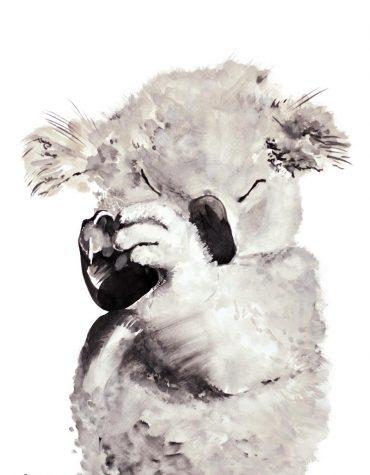 Sokru • Koala