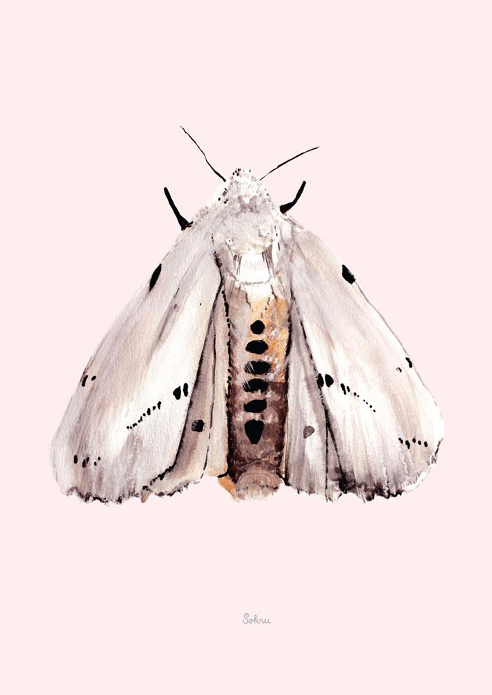 Sokru • Marsh Moth
