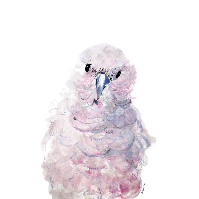 Sokru • Papukaija