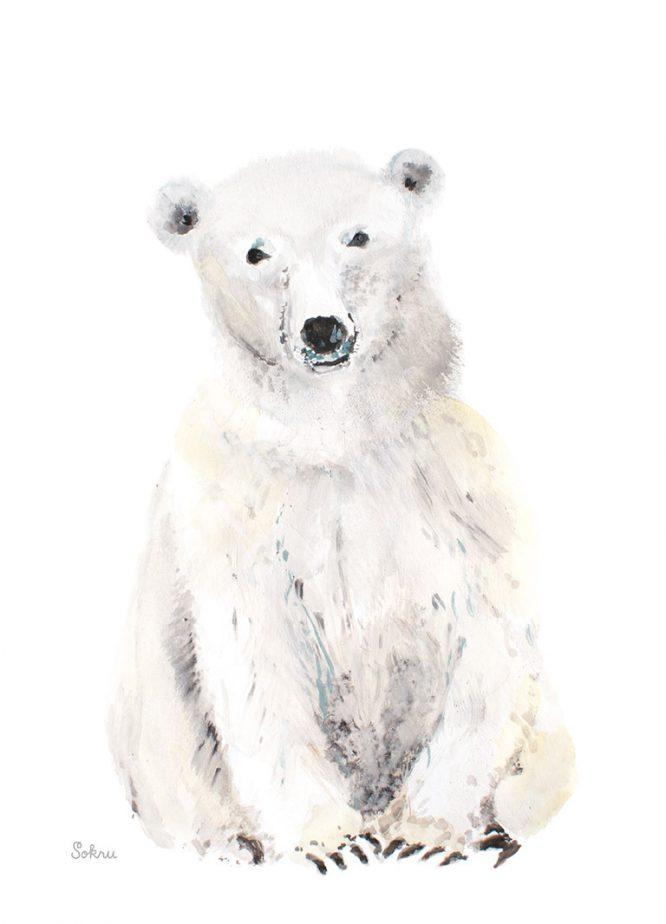Sokru • Jääkarhu