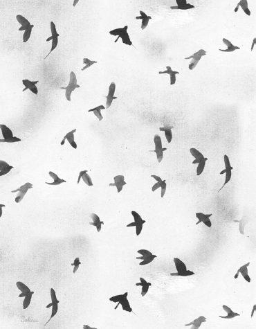 Sokru • Linnut