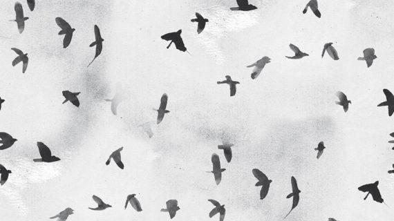 OMIN – linnut