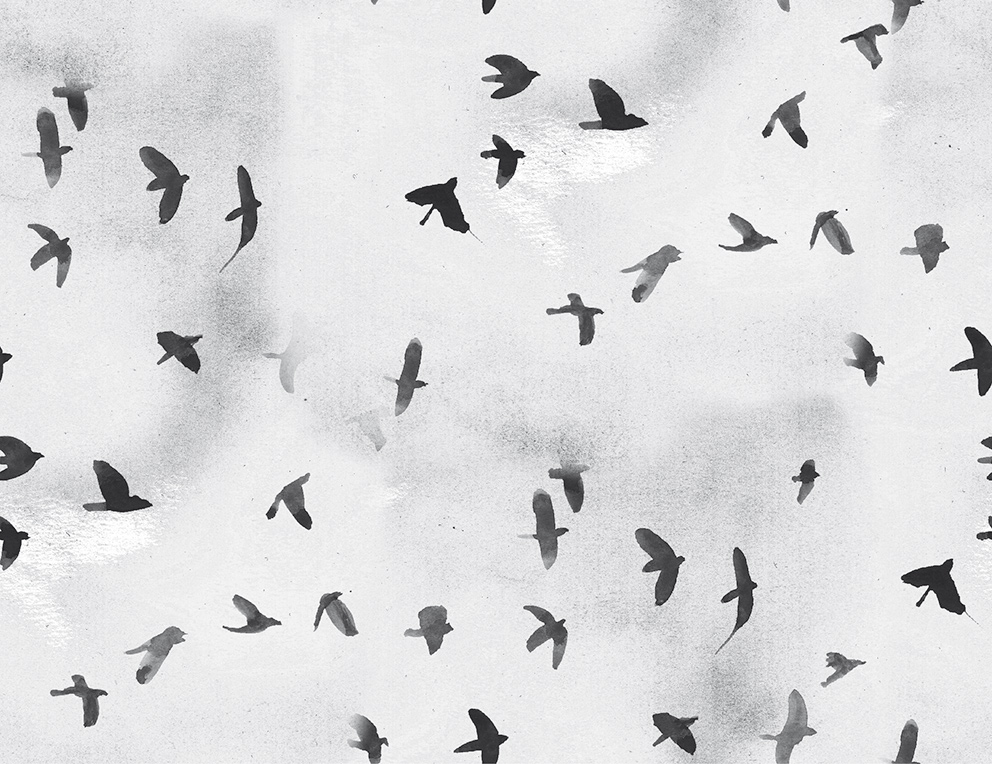 Sokru • Omin Linnut